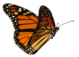 The Butterfly: Strength Through Adversity