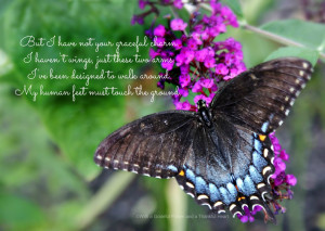 Butterfly Poems Inspiration
