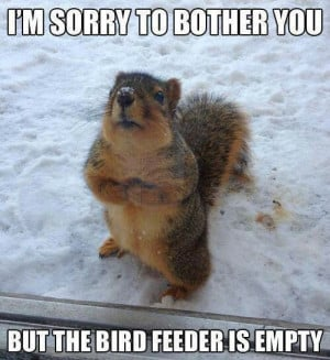 This has to be one of my squirrels