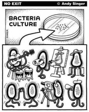 Bacteria culture :-P