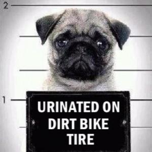 Bad dog...lol: Funnies Dogs, So Funnies, Pug-Dog, Pet, Mugs Shots ...