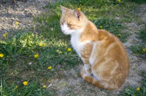 かわいい猫 〜によって Petr Kratochvil