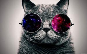 Fond d'écran Chat en noir et blanc avec des lunettes multicouleurs