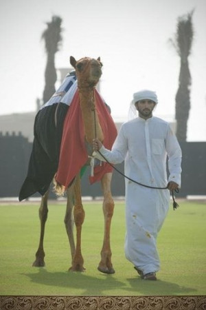sheikh hamdan bin mohammed bin rashid al maktoum/ fazza3%27s photos ...