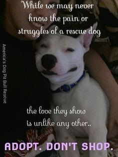 Quotes for Amazing Rescue Dog