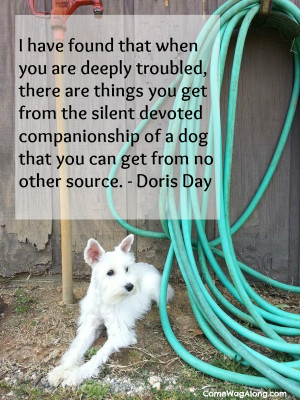... companionship of a dog that you can get from no other source