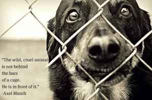 sad animal quotes sad animal quotes stop animal cruelty white sad ...