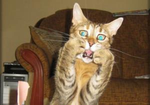 Cat Looks Shocked