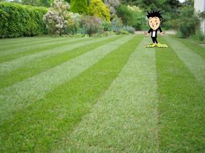 Perfect Cut Lawn Grass