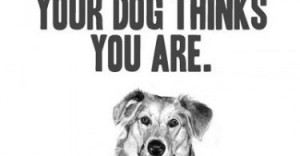 Dog-Picture-Quote-life-good-quotes-sayings-pics-375x195.jpg