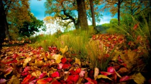 Home - Wallpapers / Photographs - Nature - Red and yellow felt leaves