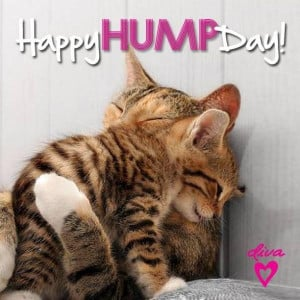 Hump day quotes, awesome, sayings, best, happy