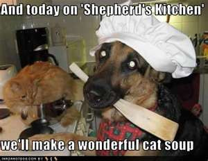 Post the funniest gsd pictures you can find...-funny-shepherd.jpg