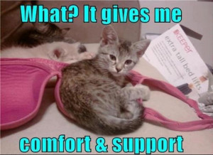 ... | Category: Funny Animals // Tags: Cute kitten in bra // May, 2013
