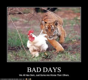 funny animal pictures having a bad day (5)