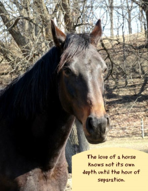Horse Sympathy Cards and Horse Memorial Gifts