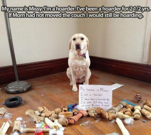... : Funny Animals // Tags: Funny dog - Im a hoarder // April, 2013