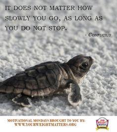 motivationalmondays #confucius #quotes #turtle More
