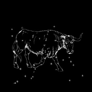 Funny Taurus Birthday Card...