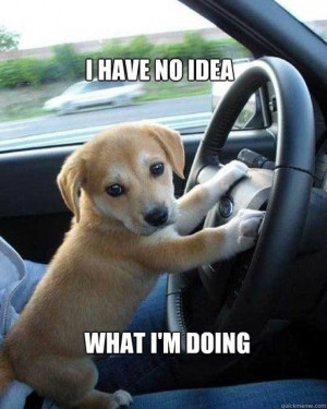 Driving Quotes and Car Memes