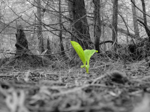 Plant-New Life by dj-pynguin