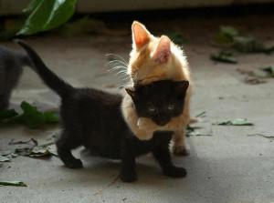 Black kitten needed a hug.