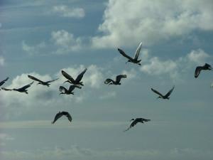 birds-in-flight_sky.jpg