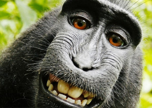 No hay derechos de autor sobre las obras creadas por animales o por la ...