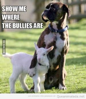 Foto graciosa de un perro que protege a una cabrita