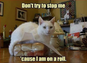 cat jokes, funny one liners
