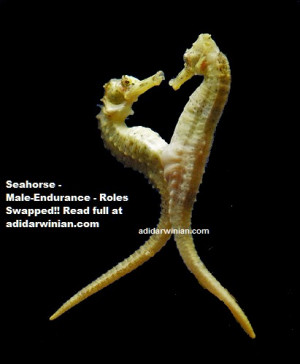 Seahorse – Male Endurance – Roles Swapped!!