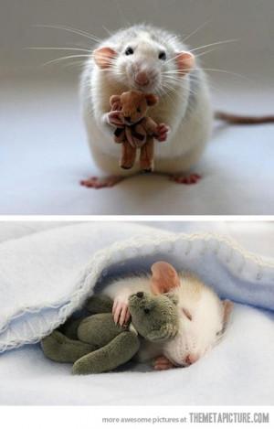 Funny photos funny rat sleeping teddy bear