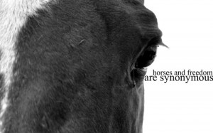 ... kb jpeg horse quotes 500 x 304 133 kb jpeg i love my horse quotes 500