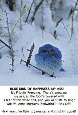 Blue Bird Winter