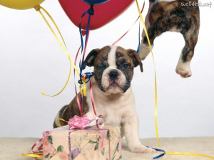 Wallpapers Get Carried Away on Your Birthday, free photos for PC ...