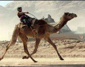 Funny Camel (88)