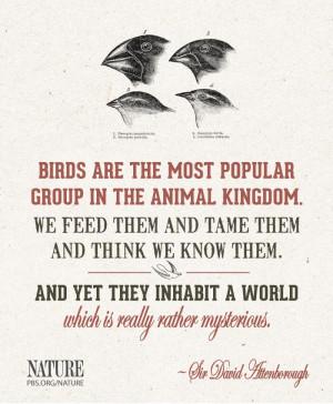 David Attenborough quote
