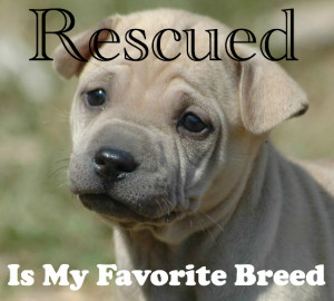 """15. """"Rescued is my favorite breed."""""""