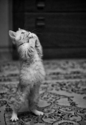 cat's pretty please