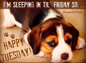 Happy Tuesday quote via Namaste Cafe at www.Facebook.com ...