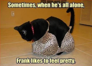 If you enjoyed this, check out our Funny Cat Gallery
