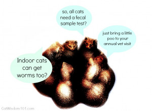 WHY DO I NEED TO CHECK A STOOL SAMPLE ON MY INDOOR CAT?