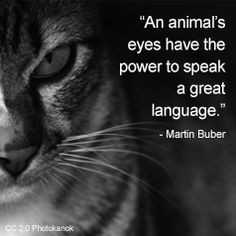 ... eyes # animals # cat # quotes # cats cat quotes pets quotes quotes cat