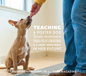 Foster Dog Quotes