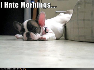 View Funny DOG pictures Collection,DOG funny picture