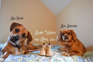 Funny We Are Having a Baby Announcements