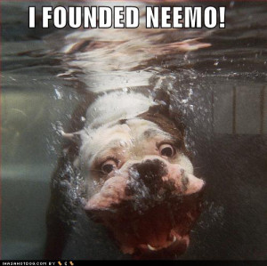 bull dog, cute, dog, finding nemo, funny, quote, text