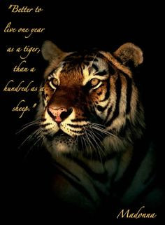 tiger quotes | Tiger Quote Graphics Code | Tiger Quote Comments ...