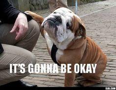 english bulldog quotes | WOW this IS an English bulldog More