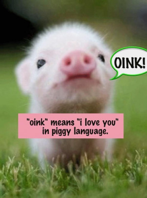 : Eh. Pig: IT'S SO CUTE!: Funny Things, Wendy Piggy, Oink Oink, Quote ...